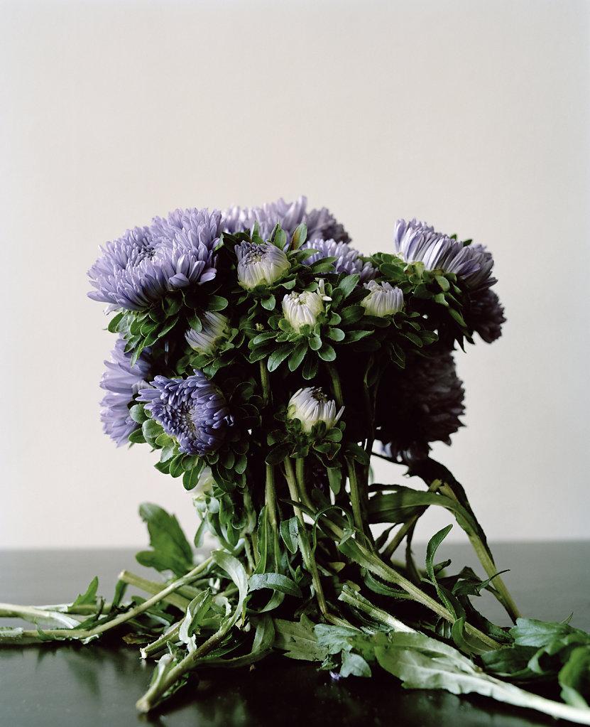 1-RestrictedFlora1-2012.jpg