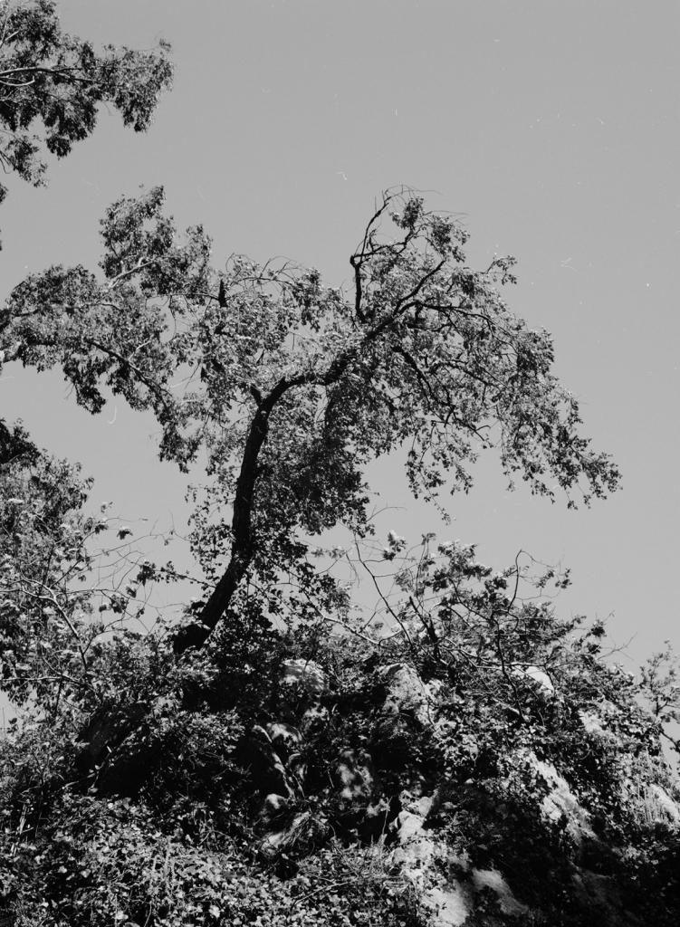 3-Landscape-Albums.jpg