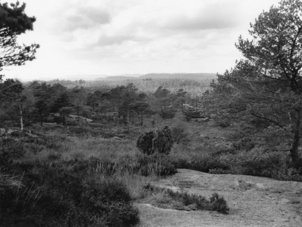 7-Landscape-Albums.jpg