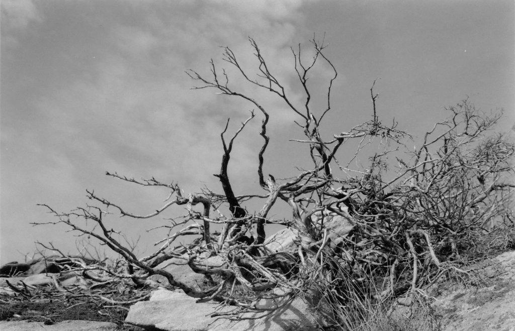 9-Landscape-Albums.jpg
