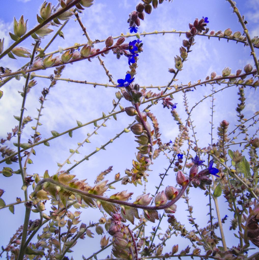 15-Blossom-9127.jpg