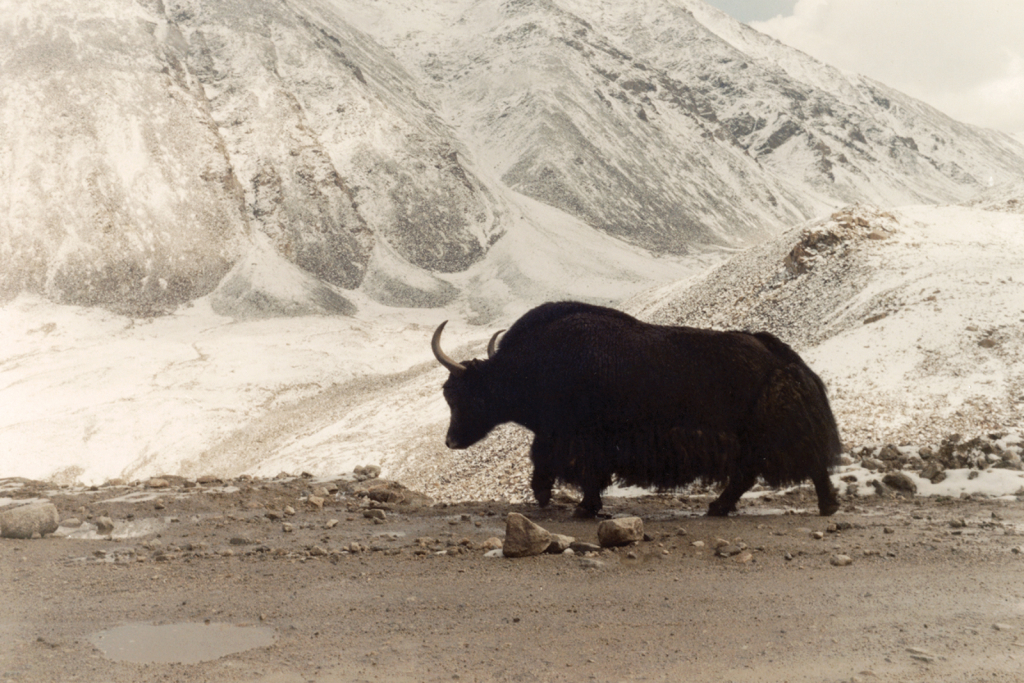6-Ladakh.jpg